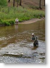 Fly Fishing Competitor