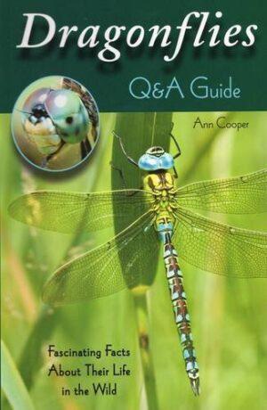 Dragonflies: Q&a Guide